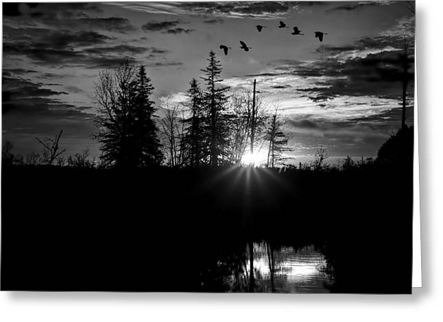 Herons In Flight - Black And White Greeting Card