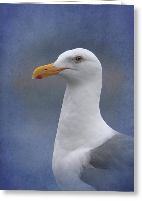 Herring Gull Greeting Card by Angie Vogel