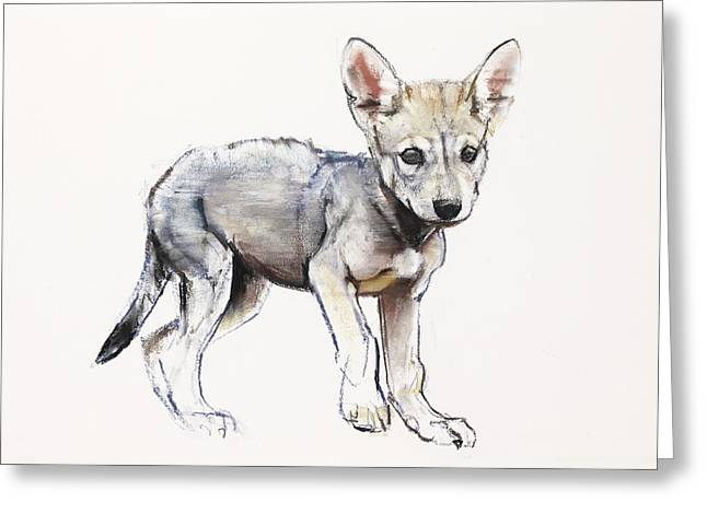Hesitating Arabian Wolf Pup Greeting Card by Mark Adlington