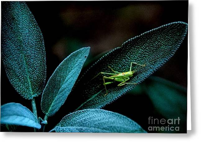 Greeting Card featuring the photograph Hey  I'm Trying To Hide by Debra Fedchin