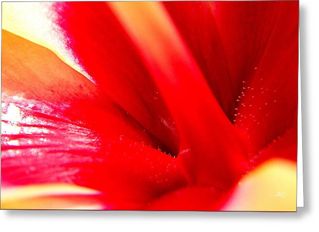 Hibiscus Abstract In Red And Yellow Greeting Card by Ben and Raisa Gertsberg
