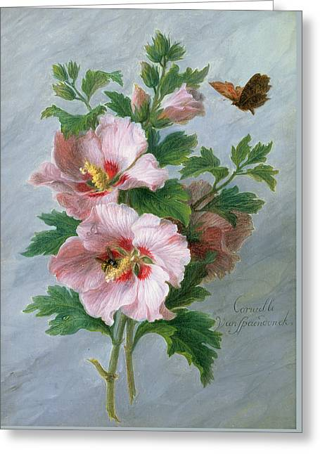 Hibiscus Against A Marble Ledge Greeting Card by Cornelis van Spaendonck