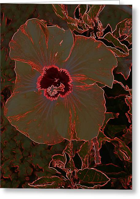 Hibiscus At Play  Greeting Card