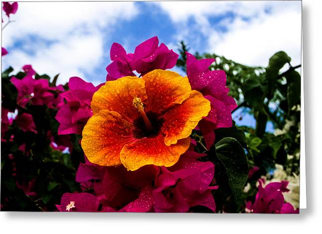 Hibiscus Beauty Greeting Card by Randy Sylvia