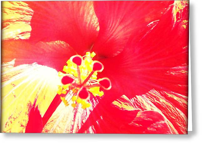 Hibiscus Greeting Card by Chris Andruskiewicz