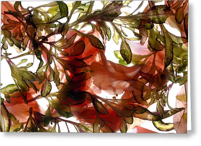 Hibiscus Coleus Array Greeting Card by Julia McLemore
