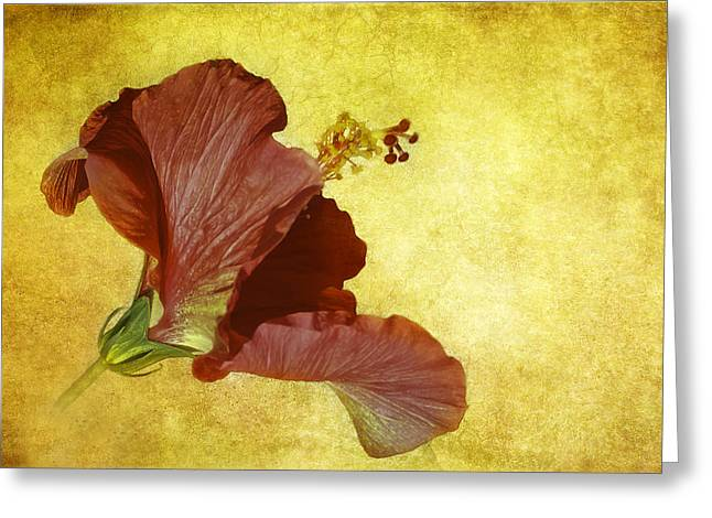 Hibiscus Greeting Card by Cyndy Doty