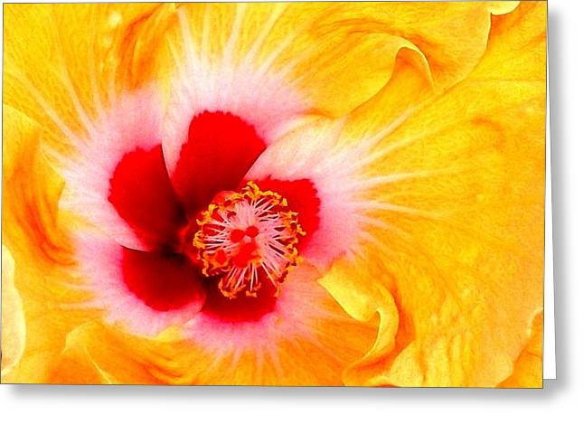 'hibiscus Explosion' Greeting Card