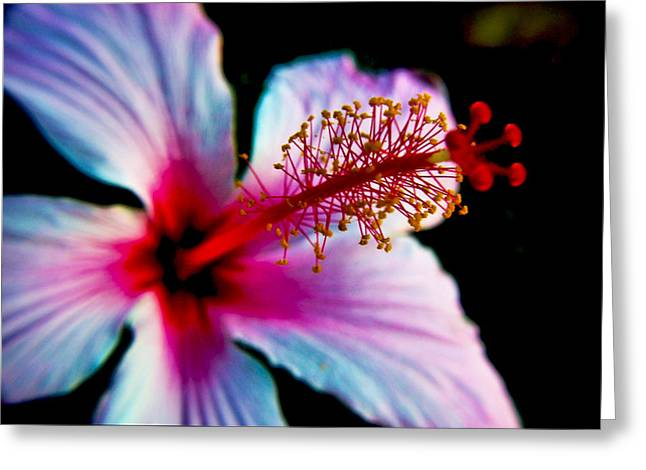 Greeting Card featuring the photograph Hibiscus Extending by Joseph Hollingsworth
