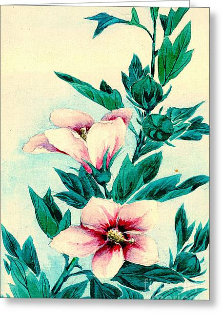 Hibiscus Flowers 1870 Greeting Card