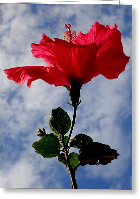 Hibiscus In The Sky Greeting Card