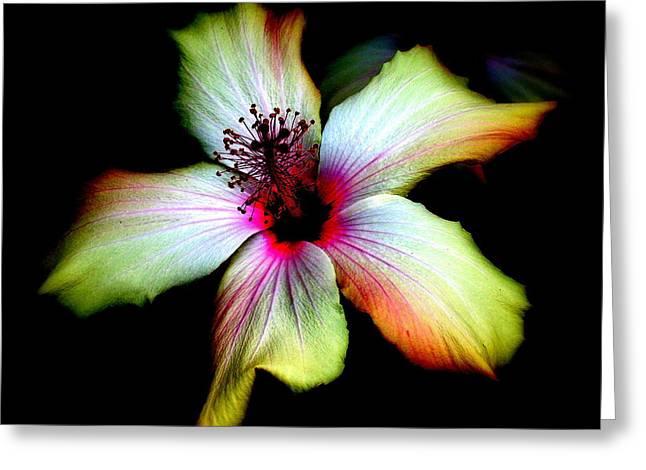 Hibiscus Greeting Card by Jodie Marie Anne Richardson Traugott          aka jm-ART