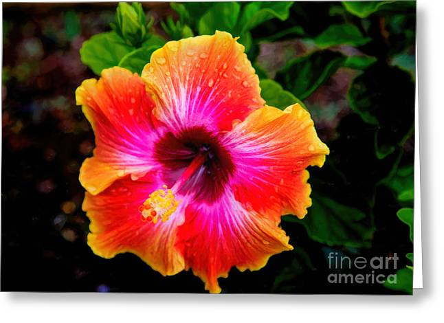 Hibiscus Greeting Card by Jon Burch Photography