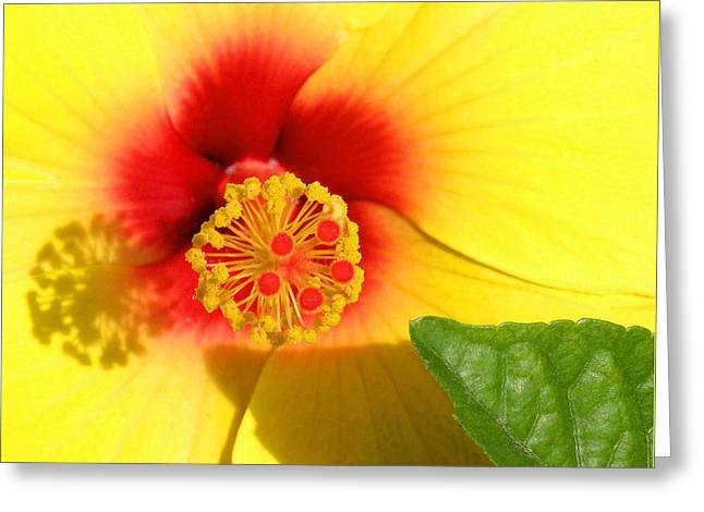 Hibiscus Shadows Greeting Card