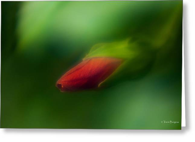 Greeting Card featuring the photograph Hibiscus Softly 1 by Travis Burgess