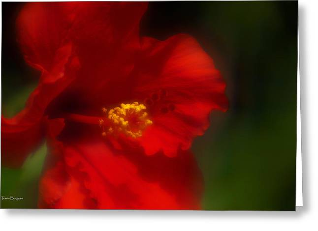Greeting Card featuring the photograph Hibiscus Softly 2 by Travis Burgess