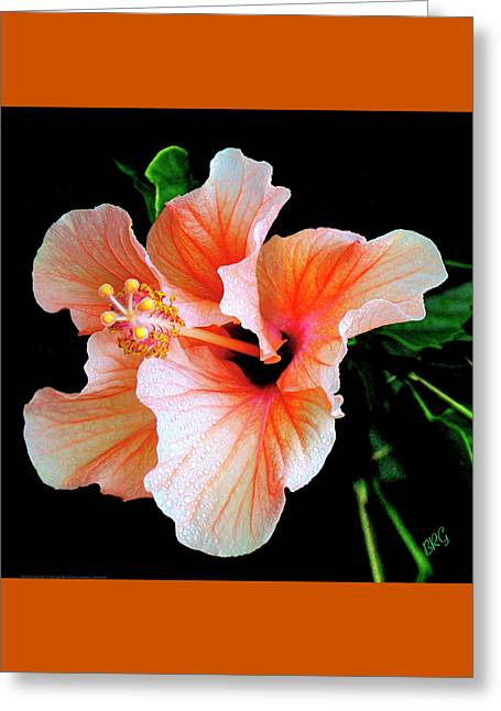 Hibiscus Spectacular Greeting Card