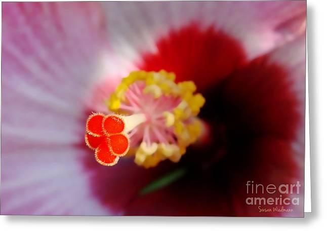 Hibiscus Stigma Pads Greeting Card