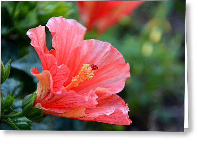 Hibiscus Summer Greeting Card