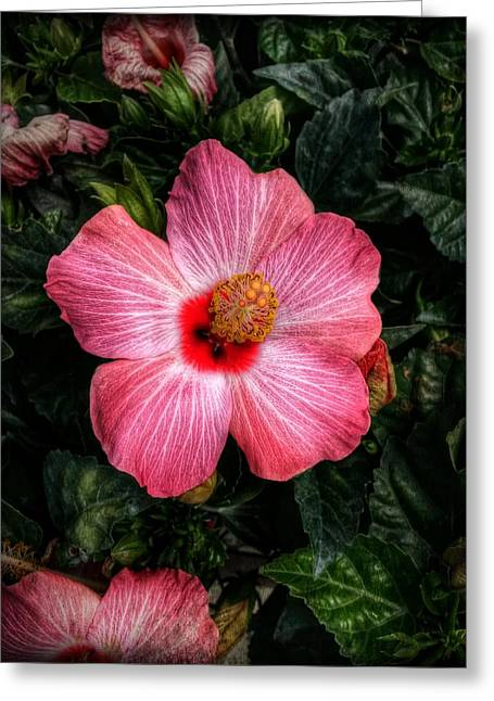 Hibiscus Sunset Greeting Card