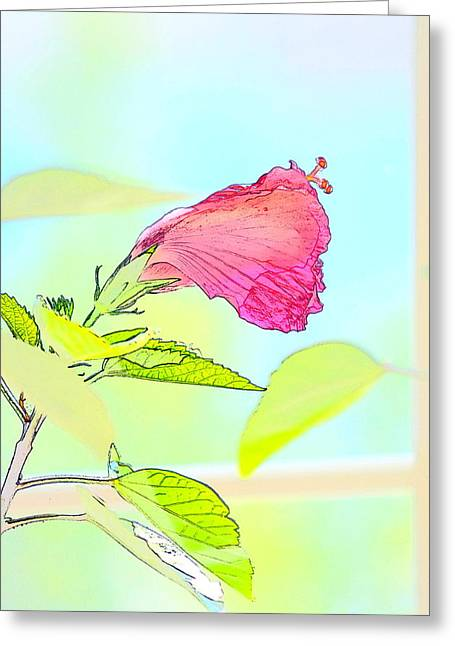 Hibiscus Unbloomed Greeting Card