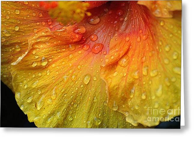 Hibiscus Water Drops Greeting Card by Lisa L Silva