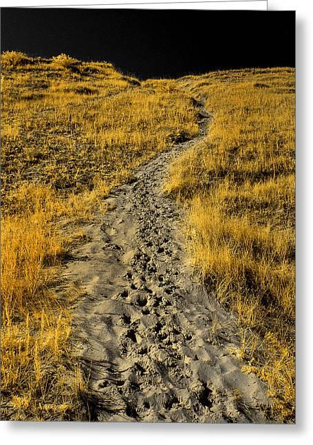 Hidden Beach Dune Path Greeting Card