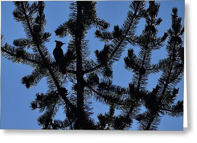 Hidden Bluejay In Silhouette Greeting Card by Rich Rauenzahn