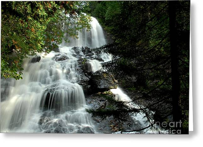 Hidden Falls Greeting Card by Tammy Collins