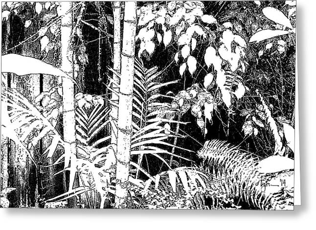 Greeting Card featuring the photograph Hidden Glade by Angela Treat Lyon