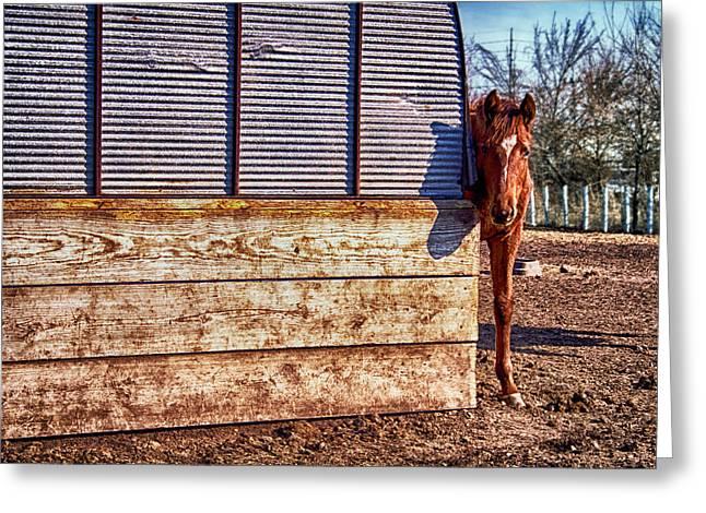 Hidden Horse Greeting Card by Ian Van Schepen