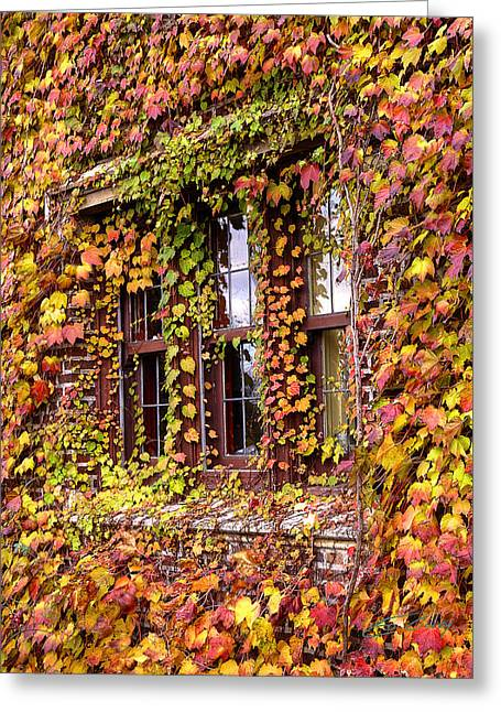 Hidden In The Maylake Ivy Greeting Card