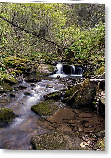 Hidden Streambed  Greeting Card by David Lester