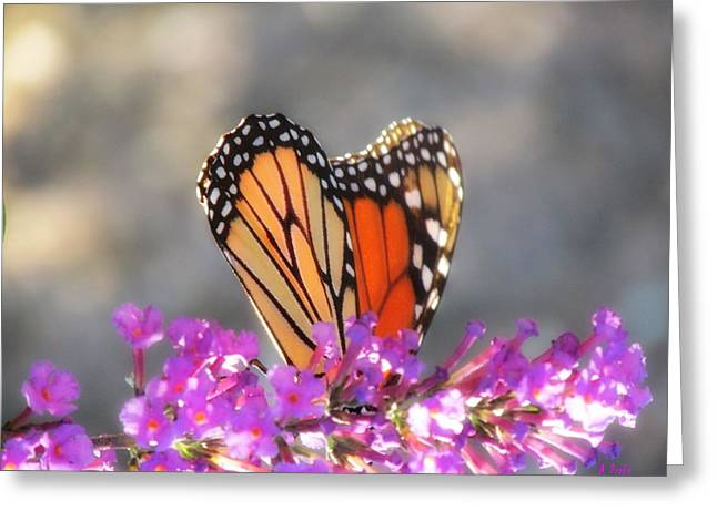 Hide And Seek Butterfly Greeting Card