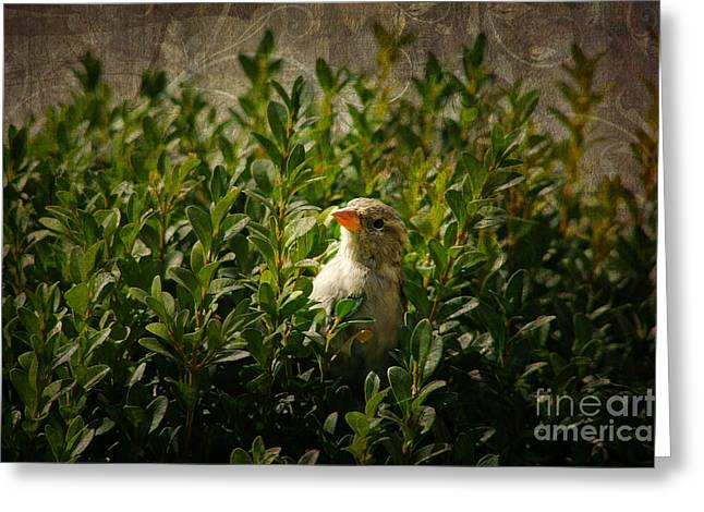 Greeting Card featuring the photograph Hide And Seek by Mariola Bitner