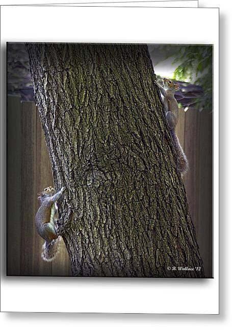 Hide And Seek Squirrels Greeting Card by Brian Wallace