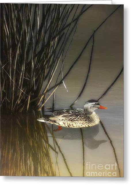 Hiding In The Reeds Greeting Card by Tom York Images