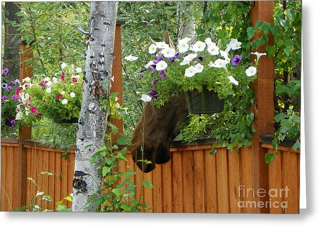 Hiding Moose Greeting Card by Jennifer Kimberly