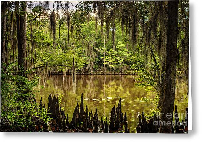 Hiding On Caddo Lake Greeting Card by Tamyra Ayles