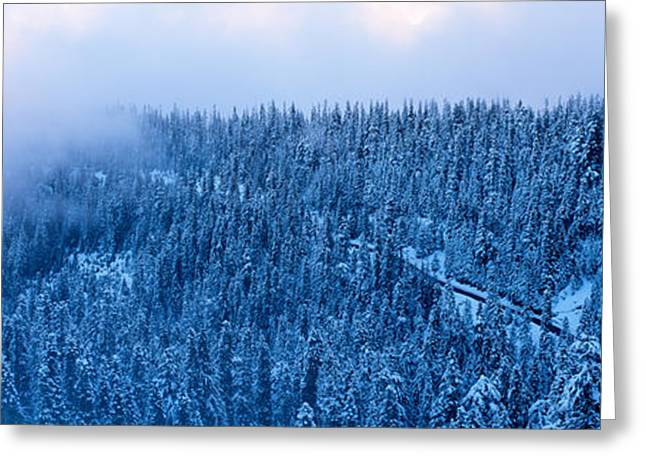 High Angle View Of A Forest, Mt Baker Greeting Card by Panoramic Images
