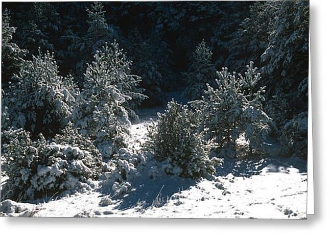 High Angle View Of A Snow Covered Fir Greeting Card by Panoramic Images