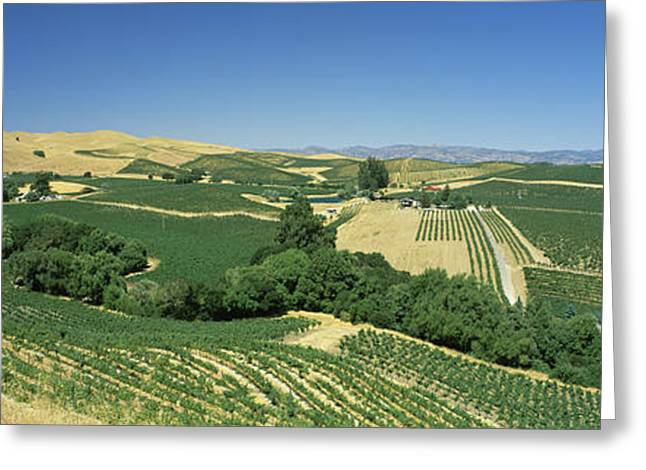 High Angle View Of A Vineyard, Carneros Greeting Card by Panoramic Images