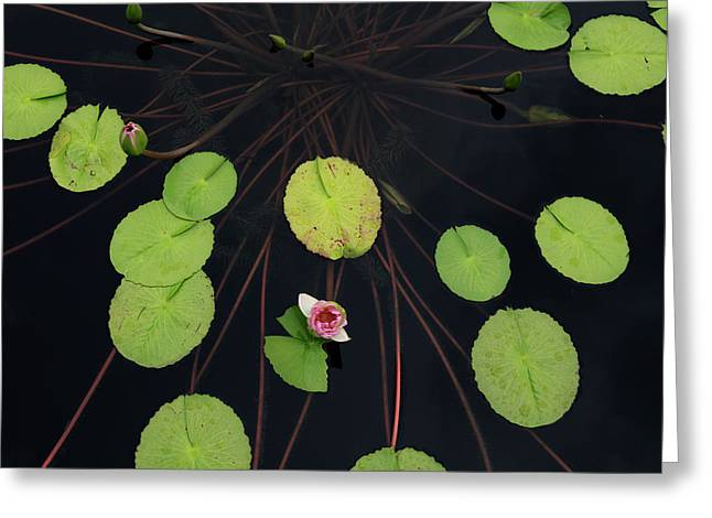 High Angle View Of Lily Pads In Pond Greeting Card by Panoramic Images