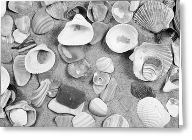 High Angle View Of Seashells Greeting Card by Panoramic Images