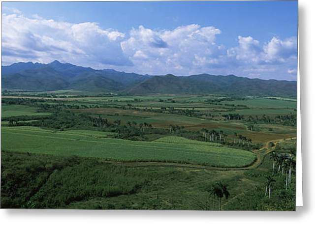 High Angle View Of Sugar Cane Fields Greeting Card by Panoramic Images