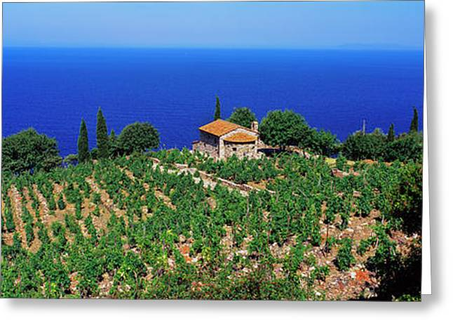 High Angle View Of Vineyard, Chiessi Greeting Card