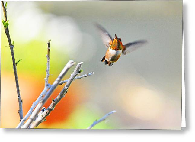 High Flying Beauty Greeting Card by Lynn Bauer