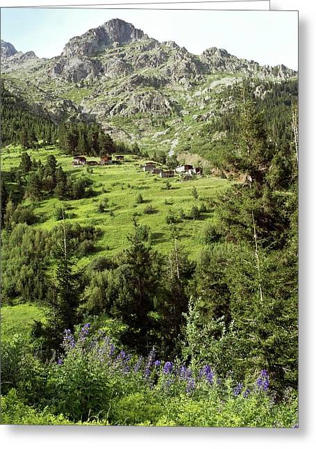 High Mountain Pastures Greeting Card by Bob Gibbons