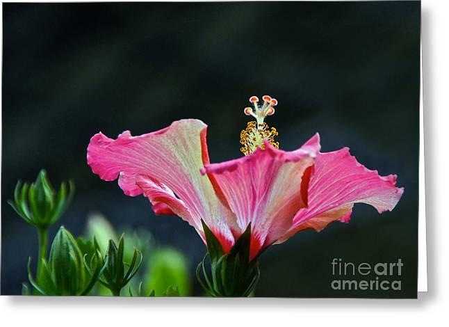 High Speed Hibiscus Flower Greeting Card