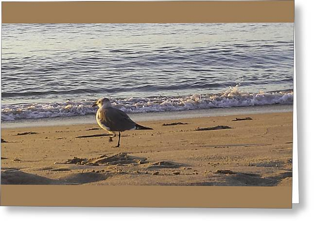 High Stepping In The Sand Greeting Card by Debra Bowers